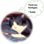 wpid-buddy-the-cat.jpg